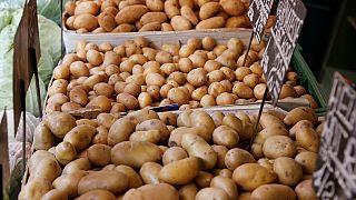 Guinée : la localité de Timbi Madina, réputée pour la culture de la pomme de terre