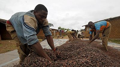 Ghana's mid-year cocoa production hit by the Harmattan