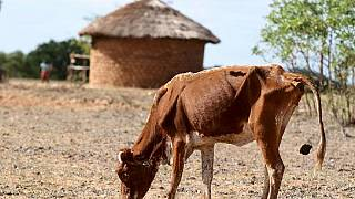 Mozambique drought leaves 1.5 million people needing help
