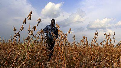 Burkina Faso : le développement de la culture du soja