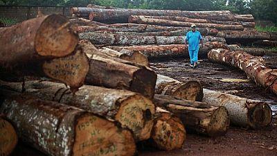 Le Sénégal en ordre de bataille contre le trafic illégal du bois