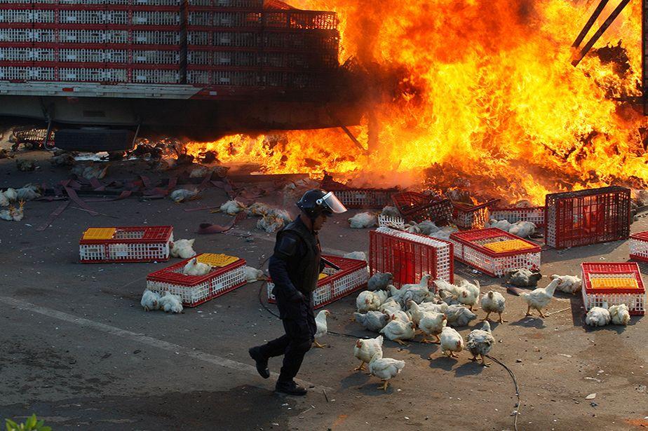 La crise sociale et les poulets au Mexique