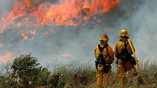 Les incendies californiens favorisés par cinq années d'intenses sécheresses