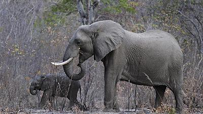 NGO constructing barrier to solve human-wildlife conflict in Kenya