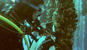 Skincare science under the sea