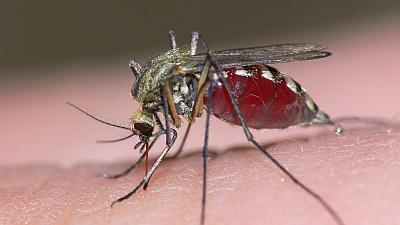 Researchers say Africa not at risk of drug-resistant malaria