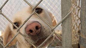 France: les internautes au secours des animaux abandonnés