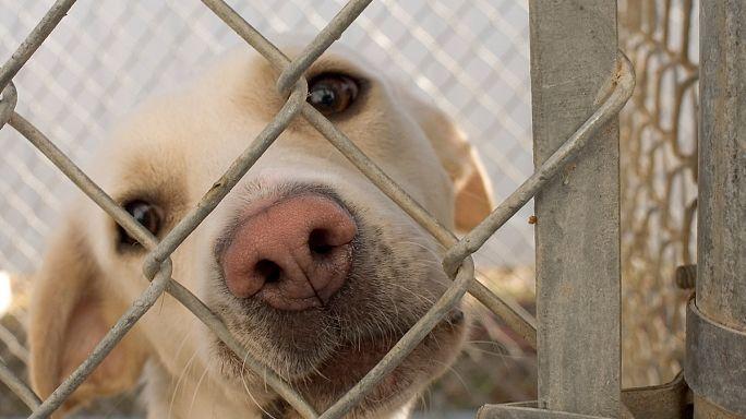 France : les internautes au secours des animaux abandonnés
