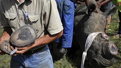 Over $1m rhino horns disappear at Zimbabwe park offices, boss suspended