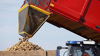 روسیه تحریم واردات مواد غذایی غرب را تا پایان سال ۲۰۱۷ میلادی تمدید کرد