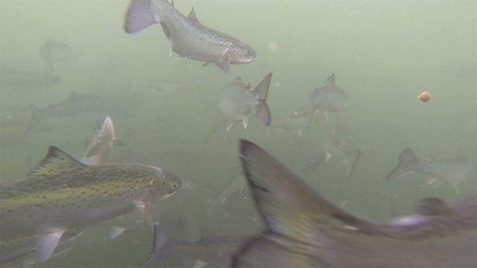Takeaway: a fresh splash for aquaculture