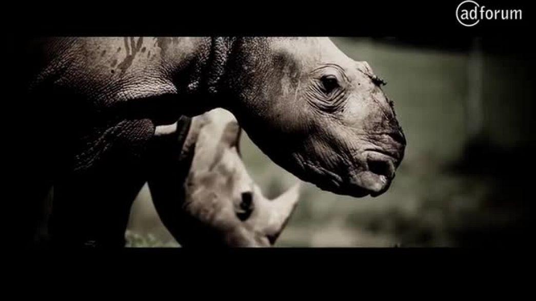 Last wild rhino (Rhino Rescue Project)
