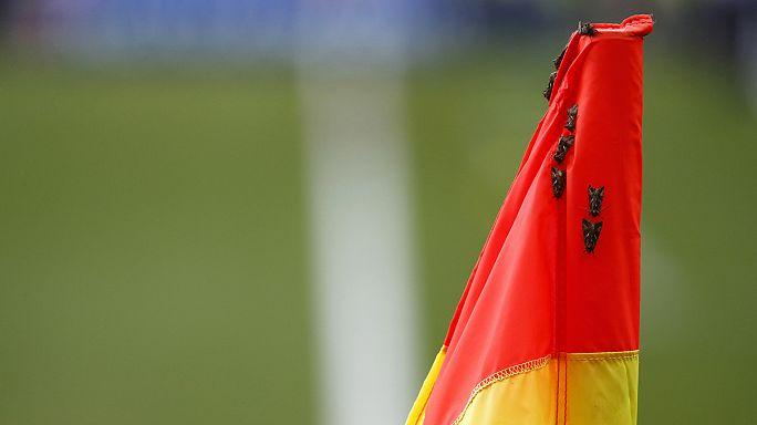 Ronaldo und die Nachtfalter - die Motten im EM-Finale