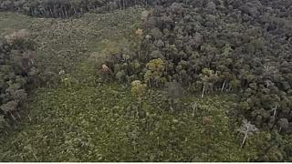 DR Congo: Controversy over forestry contracts