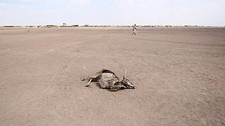 Drought could affect 100 million people - UN