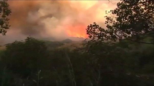 Spagna: vasti incendi in Costa del Sol, probabile origine dolosa