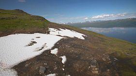 Mode de survie de la faune et de la flore en terre arctique