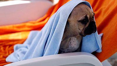 Une banque de sang pour chiens