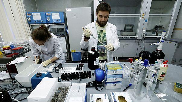 Doping, WADA conferma: Russia ha coperto atleti dopati, dal 2010
