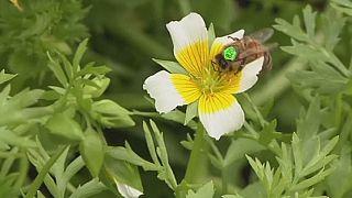 Santé: des abeilles marquées à Londres