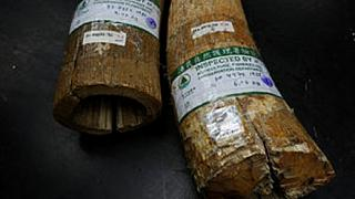 Vietnam fuelling growth of illegal ivory trade, conservation group Save the Elephants says