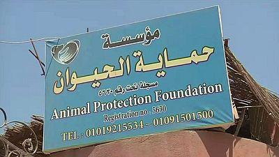 Égypte: au secours des chiens en détresse