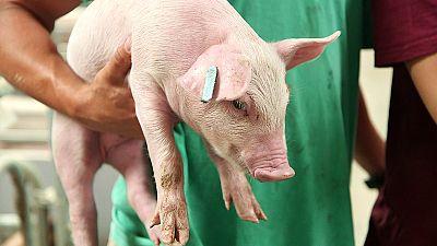 Animals, Abattoirs and Antibiotic resistance