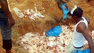 Sierra Leone : des habitants récupèrent des poulets pourris