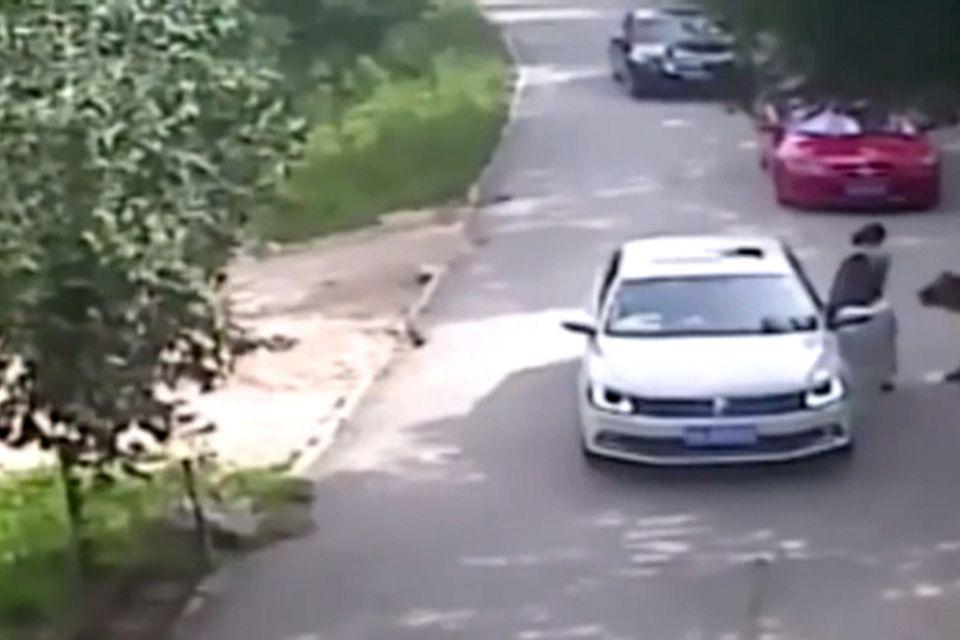 [video] Siberian tiger kills woman at Beijing wildilfe park