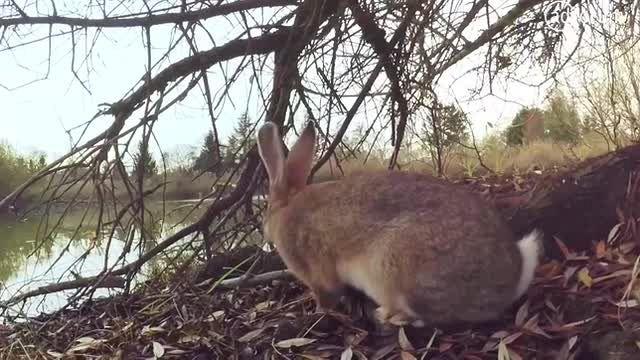 Rabbit (United Nations Environment Programme UNEP)