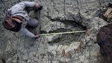 Βρέθηκε μια από τις μεγαλύτερες πατημασιές δεινόσαυρου
