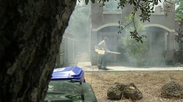 Zika : un quartier de Miami déconseillé aux femmes enceintes