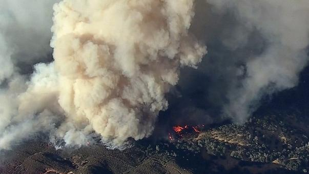 ABD'nin batı eyaletleri orman yangınlarıyla mücadele ediyor