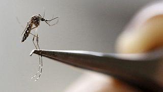 Rio 2016: Angst vor Zika?