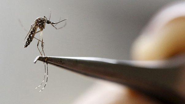 Rio 2016 Olimpiyat Oyunları'na Zira Virüsü gölge düşürdü