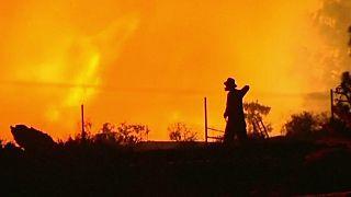 Площадь лесных пожаров на острове Пальма достигла 3 тысяч гектаров, один человек погиб