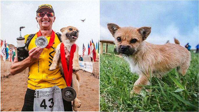 Un corredor extremo recauda fondos para llevarse al perro que le acompañó durante 125 kilómetros
