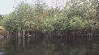 Lancement du projet-pilote d'entretien et de protection des mangroves au Bénin