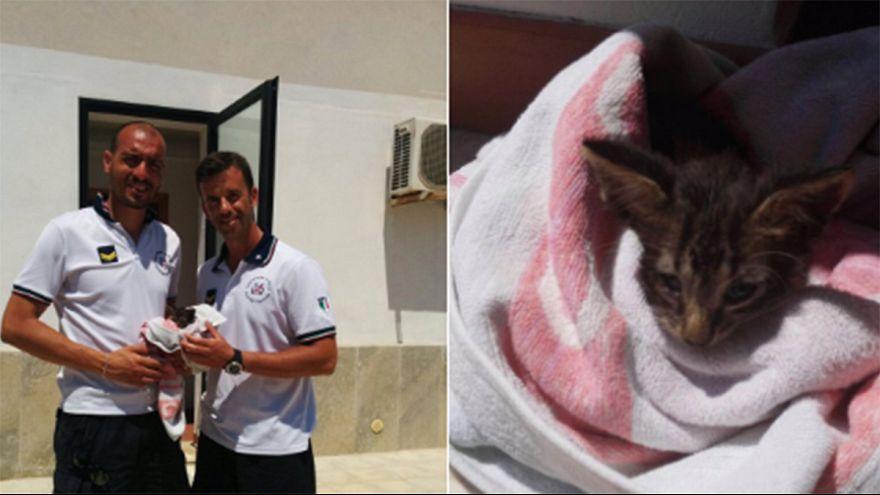 Un chaton ramené à la vie par des gardes-côtes italiens