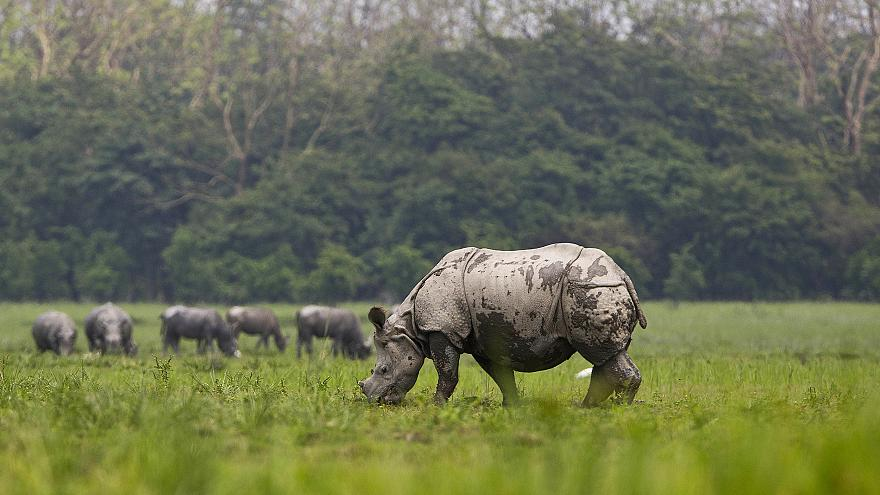 China to allow 'strictly controlled' rhino and tiger trade
