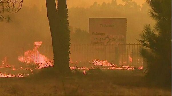 Tausende Feuerwehrleute bekämpfen Waldbrände in Portugal