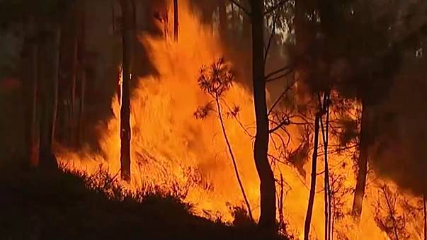 В Португалии бушуют лесные пожары