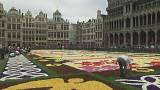 Turning Japanese: Brussels goes bonkers for begonias