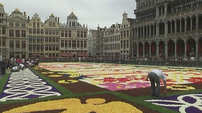 Brüsszel: 1800 négyzetméteres japán virágszőnyeg