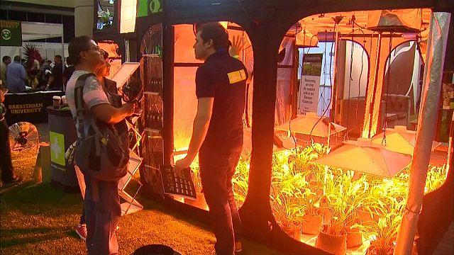 Mexikó: marihuána vásár