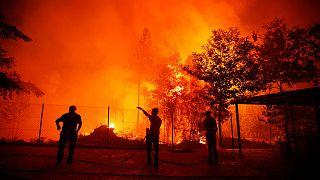 Portogallo: la devastazione degli incendi