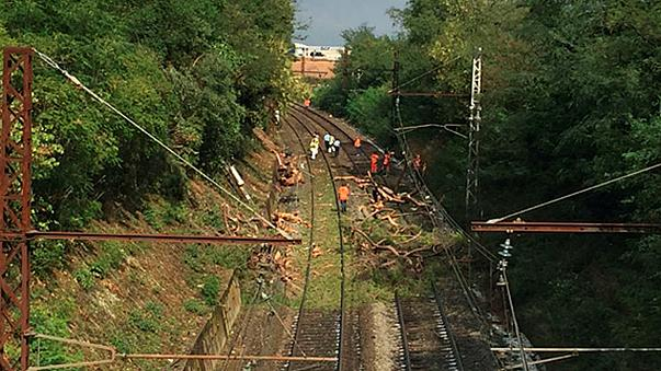 Во Франции поезд врезался в упавшее на рельсы дерево