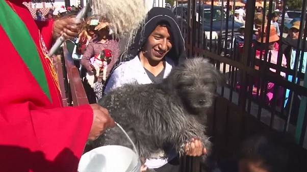 Bolivia: priest blesses animals with holy water