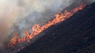 """Kalifornien: Feuerwehr macht Fortschritte gegen das """"Blue Cut fire"""""""