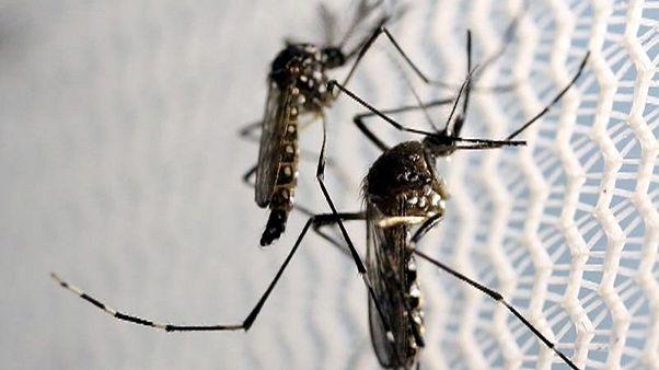 Вирус Зика в США: 36 случаев во Флориде, включая Майами-Бич